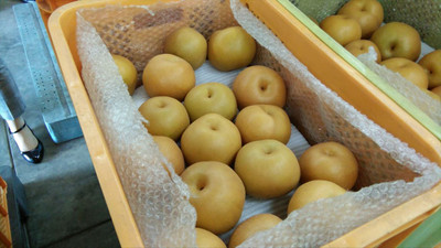 20171004_protecting_pears2_r_2