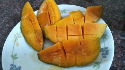 20190604_himsagar-mango2_r